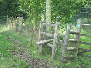 The fence and gate post were all rotten at ground level