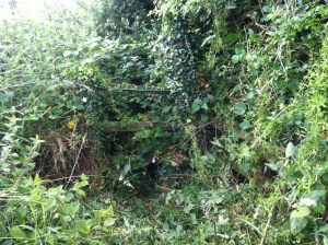 Heavily overgrown but sound underneath the vegitation
